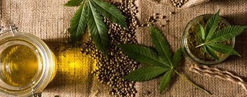Cannabis médicinal - Faits et Mythes